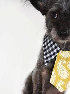 dog collar shirt and tie