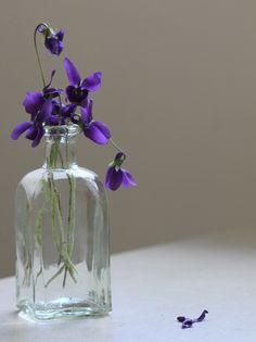 sweet violet, flower