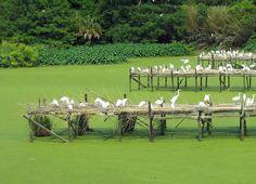 louisiana bird refuges, bird citi
