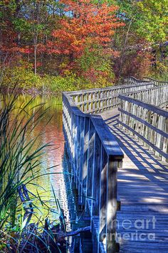 "This footbridge crosses a pond at Rowden Park in Lapeer, Michigan (Also know as Water Tower Park)....though our family calls it ""turtle park"". :-)"