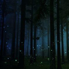 Firefly Forest, United Kingdom
