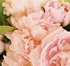 farm, color, wedding flowers, blush pink, beauti, blushes, garden, romantic flowers, pink peonies