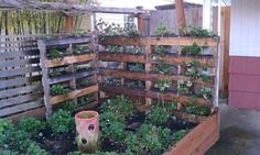 Vegetable garden made from pallets from Urban Farming.