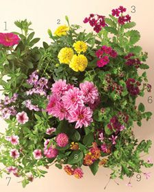 beat the heat gardening tips
