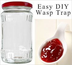 Get Rid Of Wasps: Traps & Tips