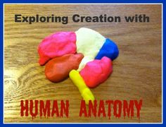 Exploring Creation with Human Anatomy Co-op Classes