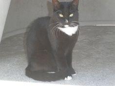 Ilda est une chatte amenée par la famille du propriétaire décédé.REFUGE SPA MME ROGER BUTET - LUYNES(Indre-et-Loire)
