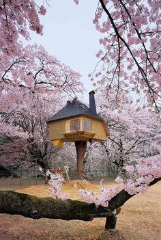 cherri, japan, dream, tree houses, fairy tales, blossom trees, treehous, tea houses, cherry blossoms