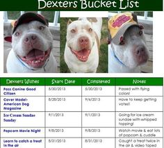 Dexter's Bucket List! Find him on Facebook!