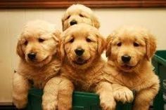 I will take all 4 please!