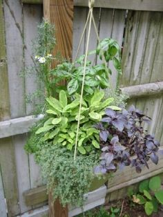 Hanging herb garden-- create one with herbs suitable for growing indoors?