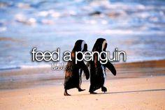 bucket list- feed a penguin