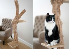 Royal Woods cat trees