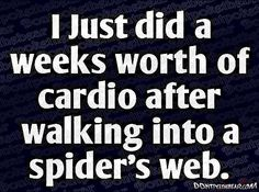 can't stand spiders!