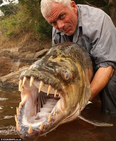 Jeremy Wade bravely poses with the 5ft long goliath tigerfish caught during an expedition up the River Congo in Africa