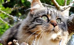 """""""The Ultimate Cat-Stuck-In-Tree Rescue"""""""