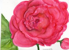 Red Peony Watercolor Painting Original Flowers by SharonFosterArt, $10.00