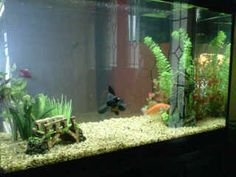 Feng shui on pinterest 23 pins for Feng shui fish tank