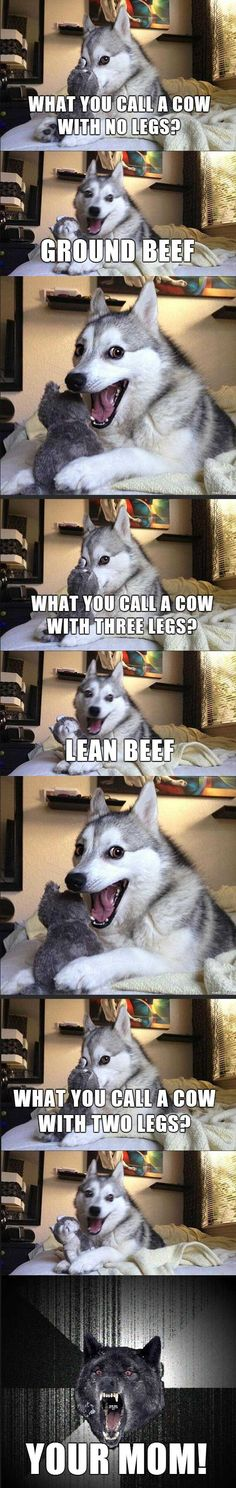 anim, beds, funny dogs, beef, husky jokes, holy cow, moon moon, bed jokes, laughing husky