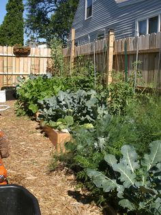 Square foot garden beds
