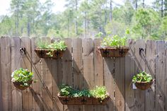 Plants on Fence