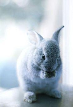 Bunny Rabbit.