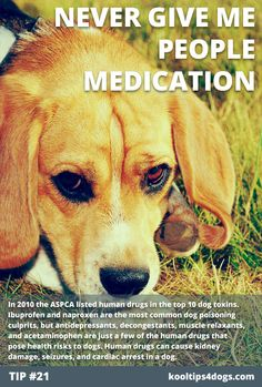 Never give dogs people medication. Human drugs are some of the most toxic substances to dogs. www.koolcollar4dogs.com