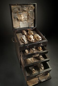 animal skull, little boxes, animals, museums, bones, ron pippin, display cases, cabinet of curiosities, chest of drawers
