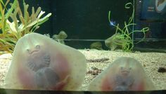 mystic aquarium, anim, aquariums, mouth, baby winter