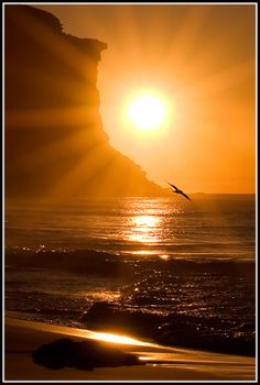 beach sunsets, the ocean, sunris, at the beach, sea