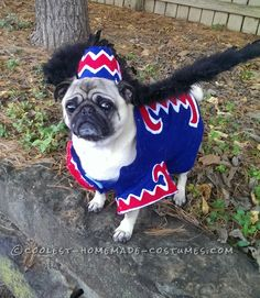 Coolest Flying Monkey Dog Costume... Coolest Halloween Costume Contest