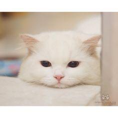 Meow City : Photo