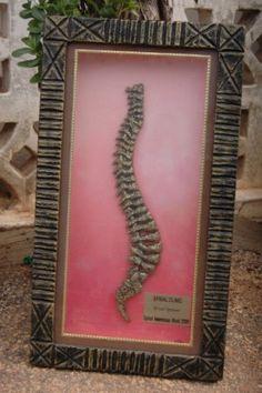 Spine & Chiropractic art