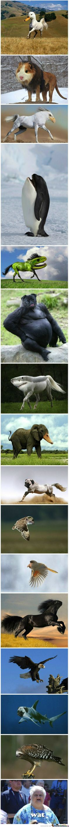 Animal face swaps