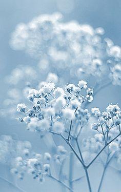 Color Azul Pastel - Pastels Blue!!!