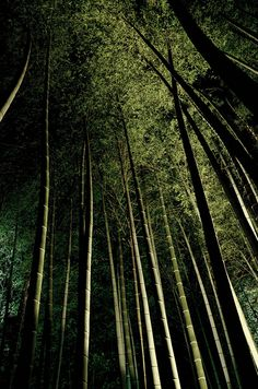Bamboo forest at night in Kyoto, Japan