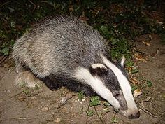 POACHING and badger baiting are among crimes to be targeted as Police and Crime Commissioner, Alan Charles examines a report into wildlife crime this week.
