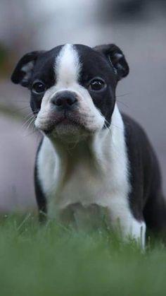 Cutie.