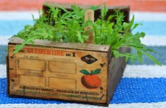 clementine crate as planter