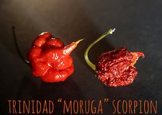 "5 Grams Dried Trinidad ""Moruga"" Scorpion Pepper - CAUTION: EXTREMELY HOT"
