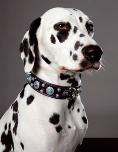 Dog Collars from Northernmoods via The Stately Hound