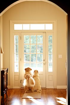 A puppy waiting at the door