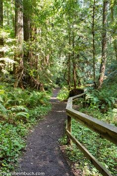 Soak in the solitude at Butano State Park Take a walk among the redwoods in this serene park in the Santa Cruz mountains. www.allabouttravel.org www.facebook.com/AllAboutTravelInc 605-339-8911 #travel #vacation #escape #nationalparks #california #hiking #family