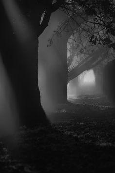 #trees #photography #BlackandWhite