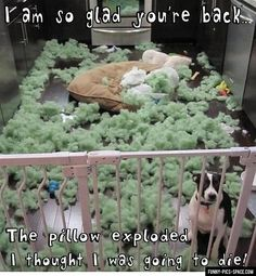 Funny!! dogs, funny pictures, funni, thought, dog beds, kitchen, puppi, pillows, funny memes