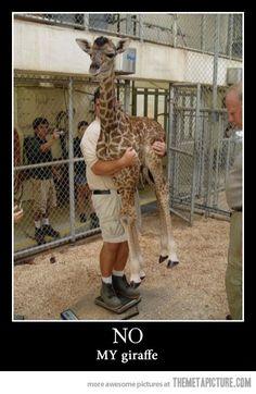 no, my giraffe!