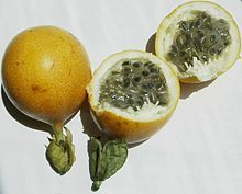 Passiflora ligularis, commonly known as the Sweet granadilla or Grenadia is a plant species in the Passiflora genus