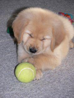 First tennis ball...