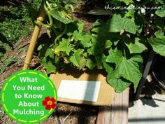 what you need to know about mulching!