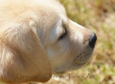 YELLOW LABRADOR  PUPPY Greeting Card  Dog by overthefenceart, $5.00